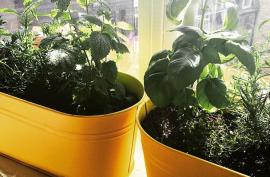 windowsil herb boxes