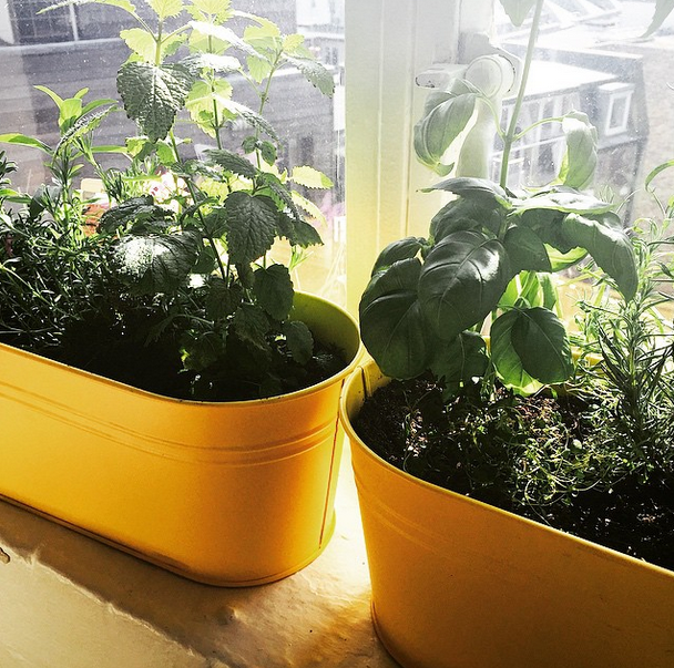 windowsil herb boxes