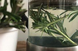 Fresh herbal Rosemary tea for skin and hair